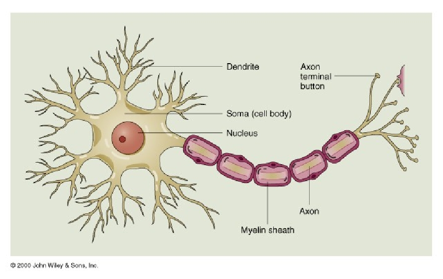 20 cs 110 neuron ccuart Choice Image
